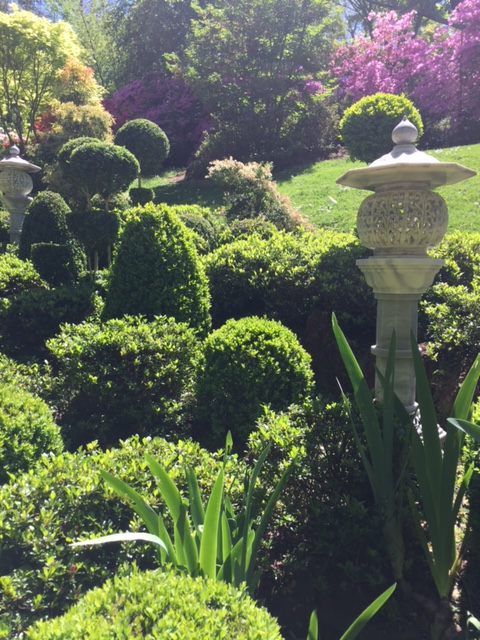 Fabulous topiary in the Stokes Collection Garden