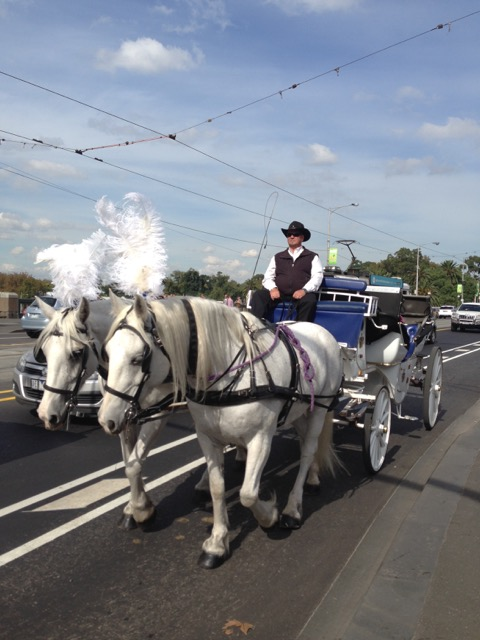 Horse drawn carriage in Melbourne