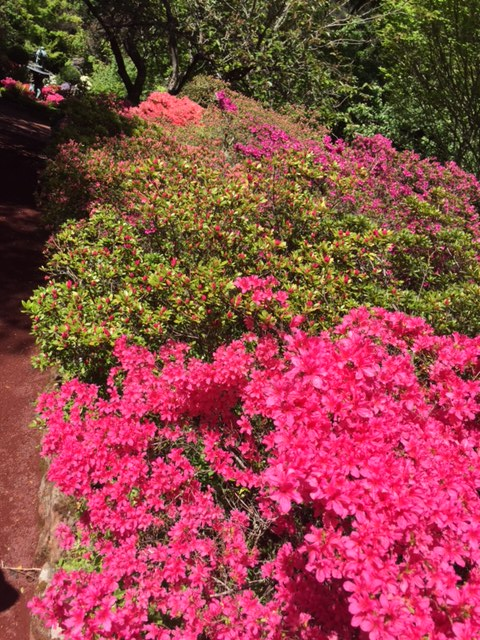 Flower beds full of colour that are never ending.