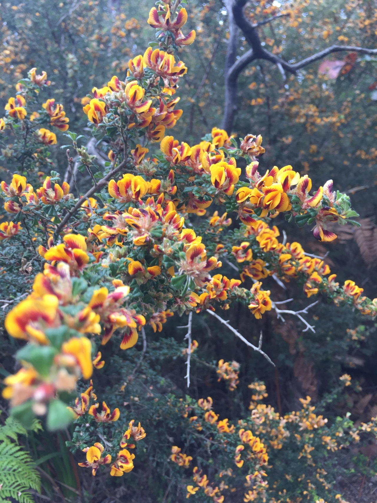Fabulous native bush