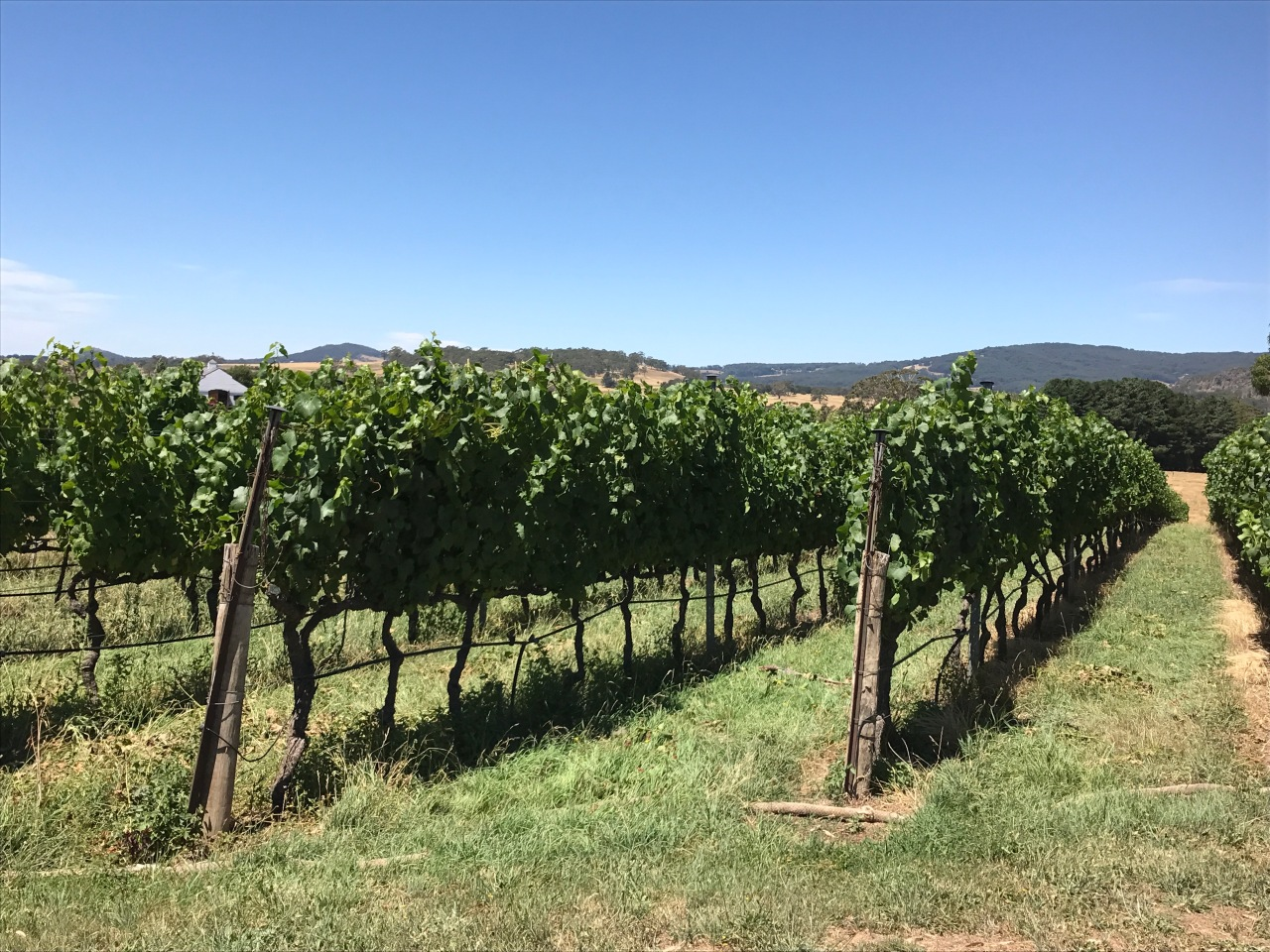 Macedon Ranges Wine Tour