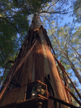 Redwood IMG_7102