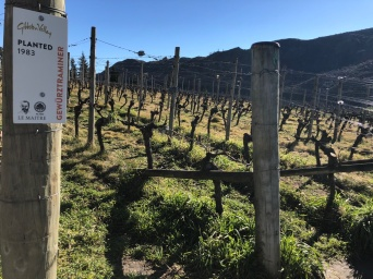 Gibbston Valley Vineyard