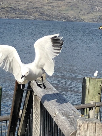 Bird drying its wings